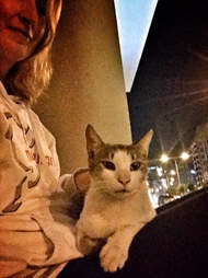 Braveheart the street cat visits his new mom