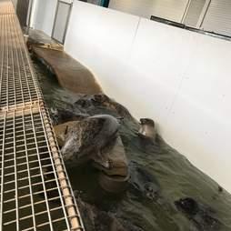 Seals trapped inside tiny tank