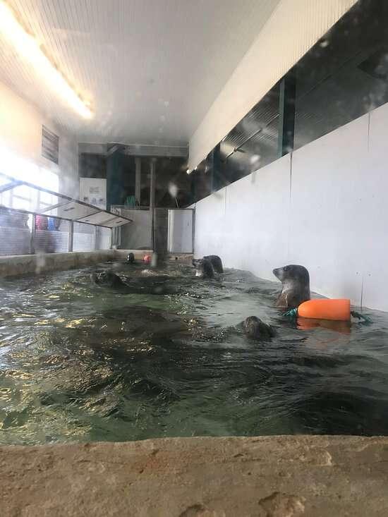 Harbor seals trapped inside tiny tank