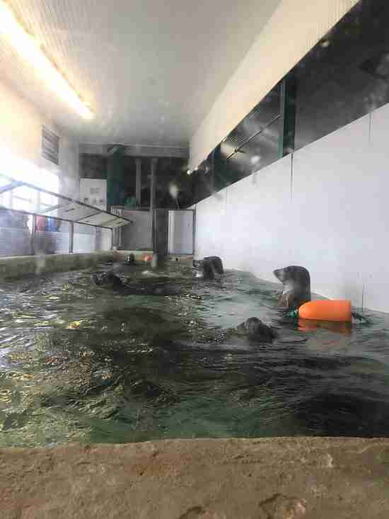 Harbor seals trapped inside tiny tank