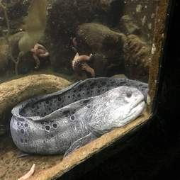 Fish inside tiny aquarium tank