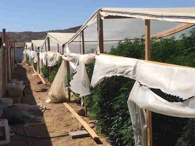 Cops On Raid Of Illegal Pot Farm End Up Saving An Adorable Life