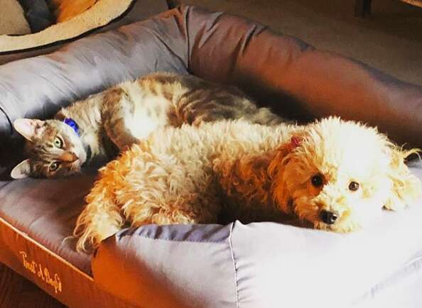 Double amputee rescue dog with her best friend, a cat named Henry