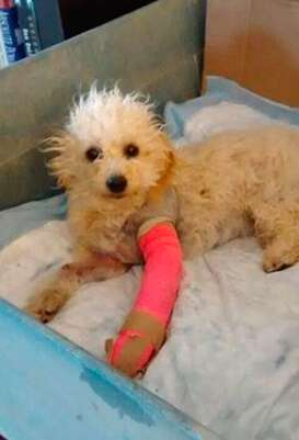 Dog with two broken legs