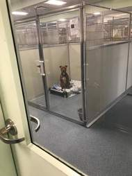Dog inside shelter kennel