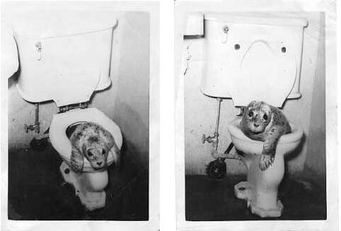 Baby seal inside toilet