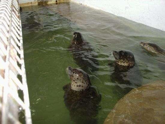 Seals inside tiny aquarium pool