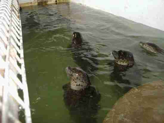 Seals inside tiny aquarium pool