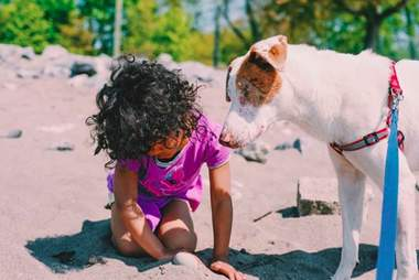 Stevie the blind dog plays with little girl