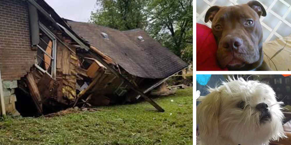 Loyal Dogs Warned Their Family The House Was About To Collapse