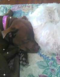 Dogs sleeping together on bed