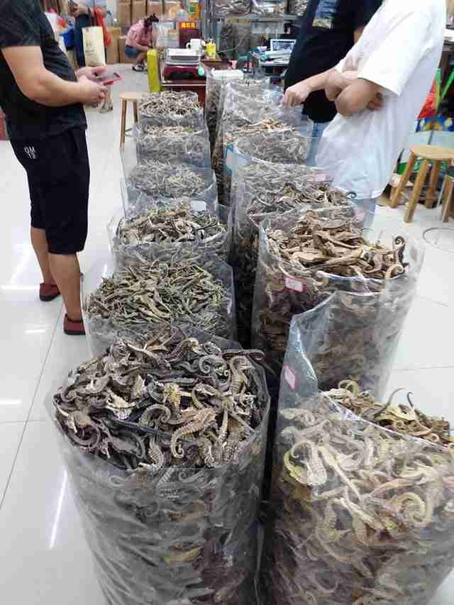 Bags on dried seahorses being sold in shop