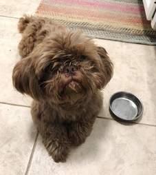 Radar the senior rescue dog escapes Houston, Texas shelter