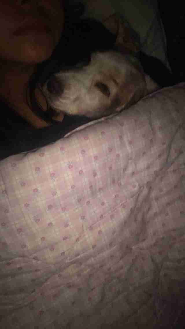 dog gets tucked into bed every night