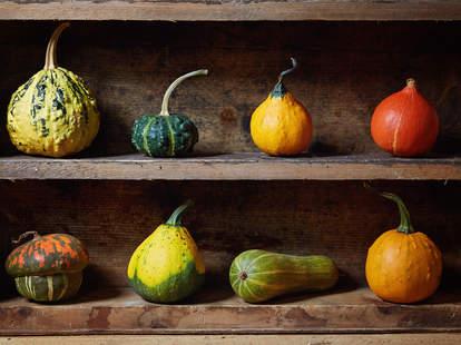 gourds pumpkin squash fall decorative decorations edible eat gourd