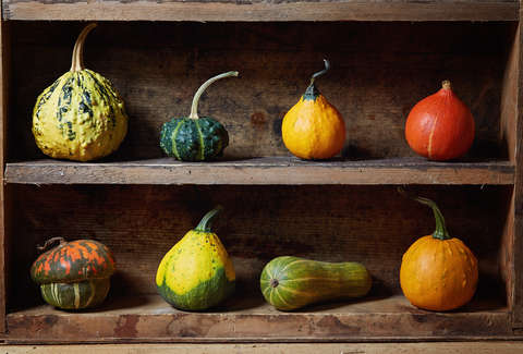 Can You Eat Gourds Difference Between Gourds Vs Squash Explained