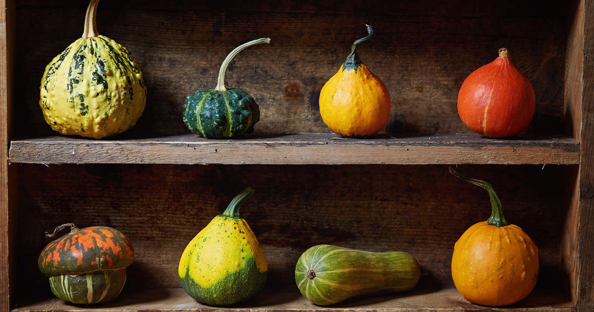 Can You Eat Gourds Difference Between Gourds Vs Squash