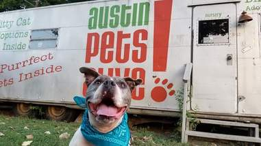 Smiling pit bull standing in front of trailer