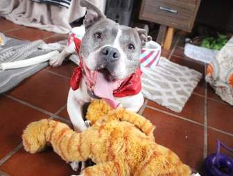 Dog standing above stuffed animal