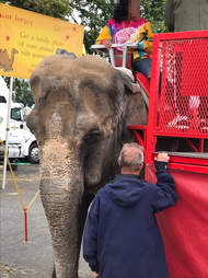 Elephant forced to give rides at fair