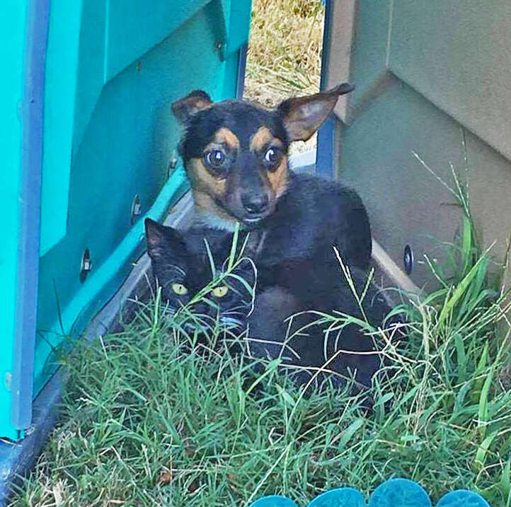Chihuahua protects kitten at soccer park in Virgina
