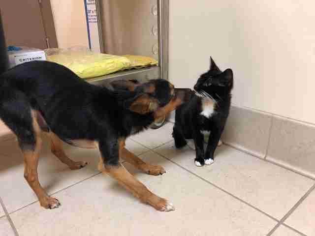 Gomex and Morticia play together at the shelter