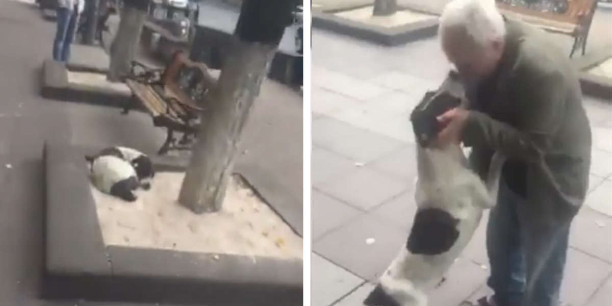 Lost Dog Living On Street Cries With Joy When His Owner Finally Finds Him