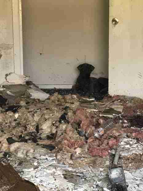 Dog hiding in wrecked apartment complex