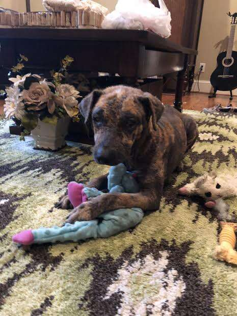 Rescued dog lying on floor with toy