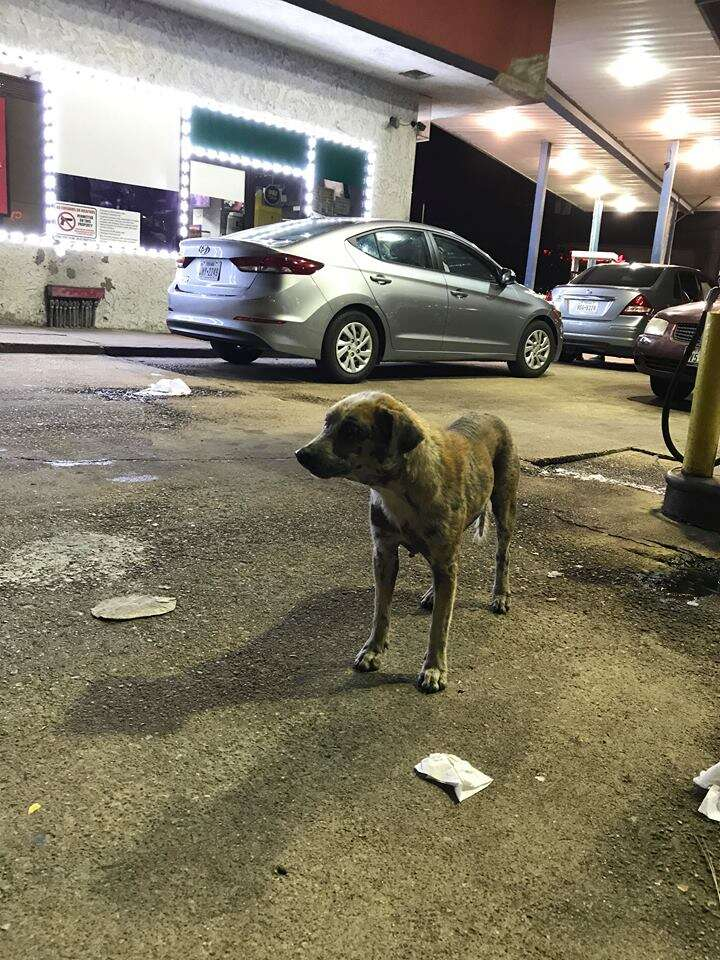 Dog standing on concrete parking lot