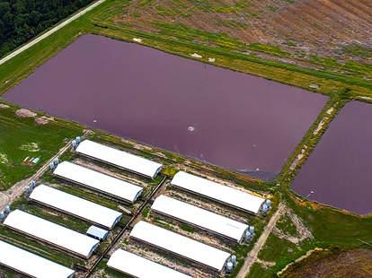 Hurricane Florence, Hog Farm