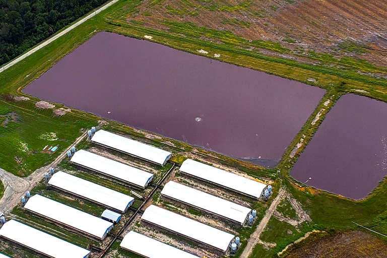 Hurricane Florence, Hog Farm