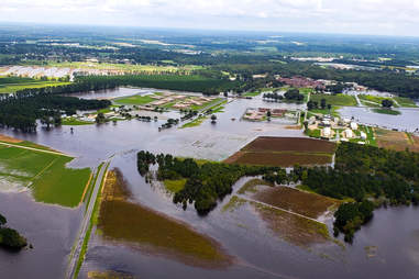 Hurricane Florence, hog farms