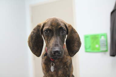 Shelter dog in Atlanta who had a heart condition