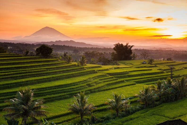 Rice terraces at sunrise, Bali, Indonesia