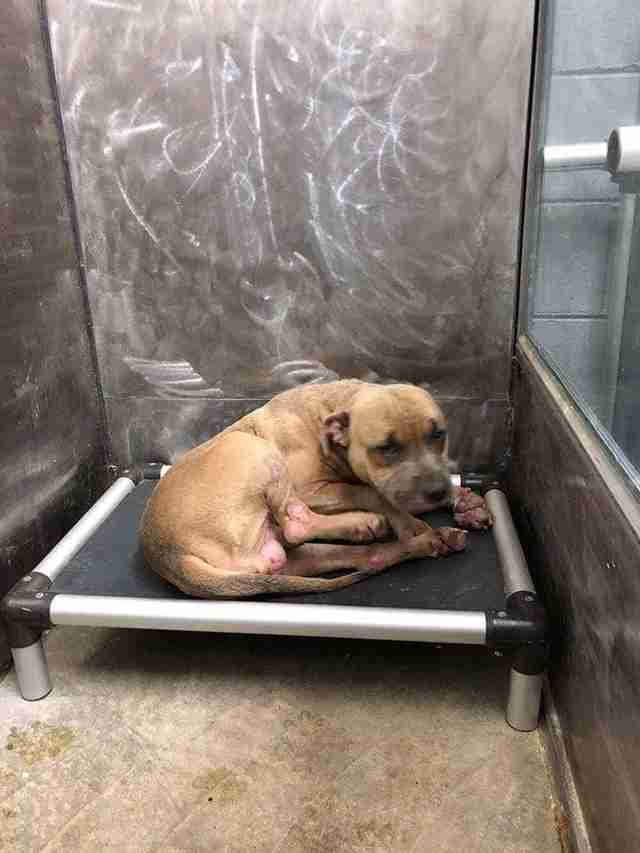 Scared dog in shelter kennel
