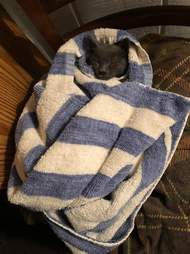 stray cat rescued