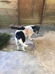 Dog after she healed from mange