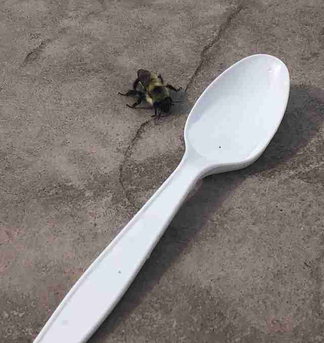 Canadian woman finds one-winged bee near pool