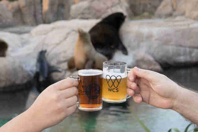 beer in front of seals