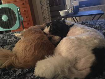 Charlie snuggles with his new dog brother