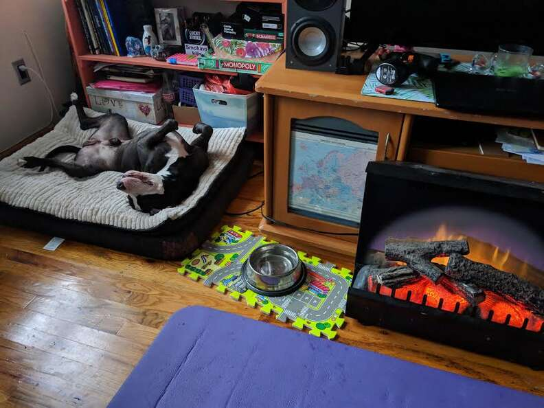 Rescued pit bull relaxing in his new home