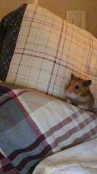 abandoned hamster