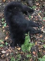Black bear cub rescued from plastic jar in Maryland