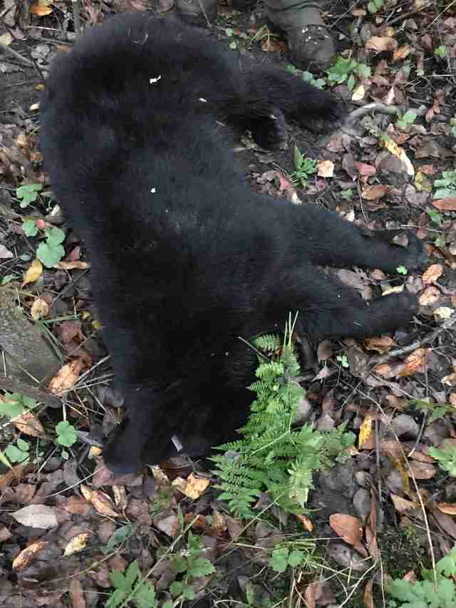Black bear cub rescued from plastic jar in Maryland