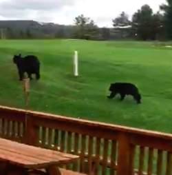 Black bear mom and cub in Maryland