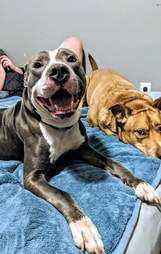 Smiling dog on bed with other dog
