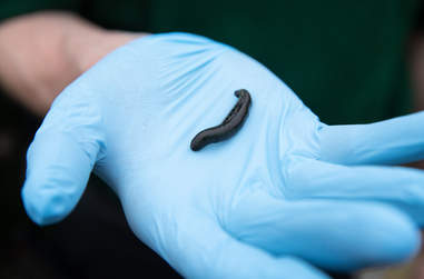 Pet leeches abandoned at vet office