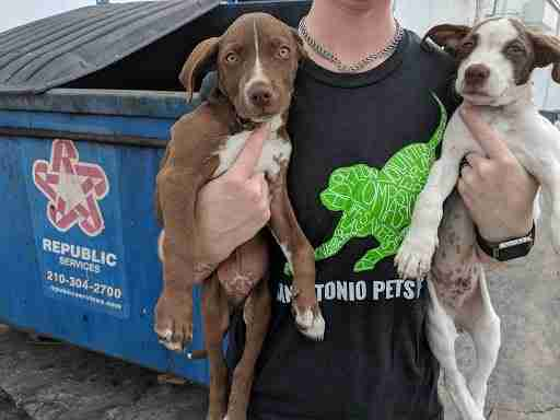 Puppies, Crockett and Bowie, saved from dumpster at strip mall
