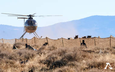 Helicopter rounding up wild horses
